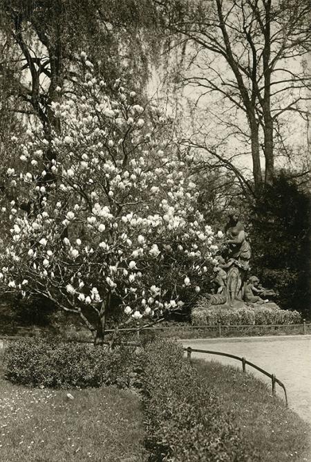 Flora, najczęściej przemieszczana rzeźba szczecińska, przed wojną stała w Parku Grabowskim – dzisiejszym parku im. Żeromskiego, który wówczas zdobiły wspaniałe okazy magnolii. (MNS/A.Foto/15478)